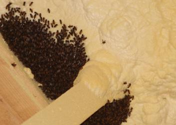 Honey Bee Removal Montgomery, AL