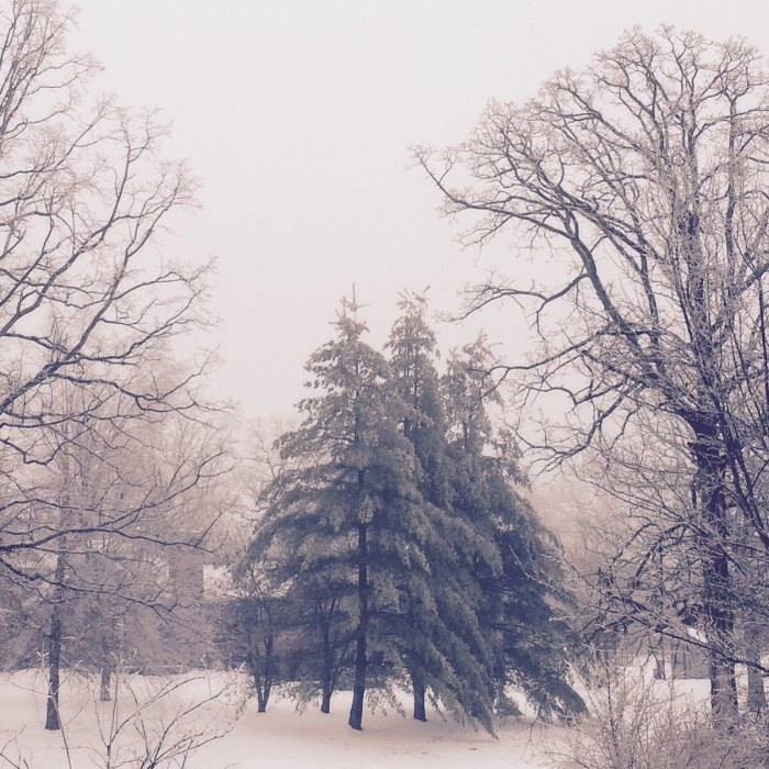 SnowDaysIMG_0925