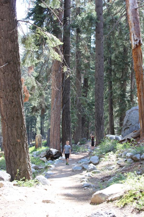 Trees Tokopah Hike