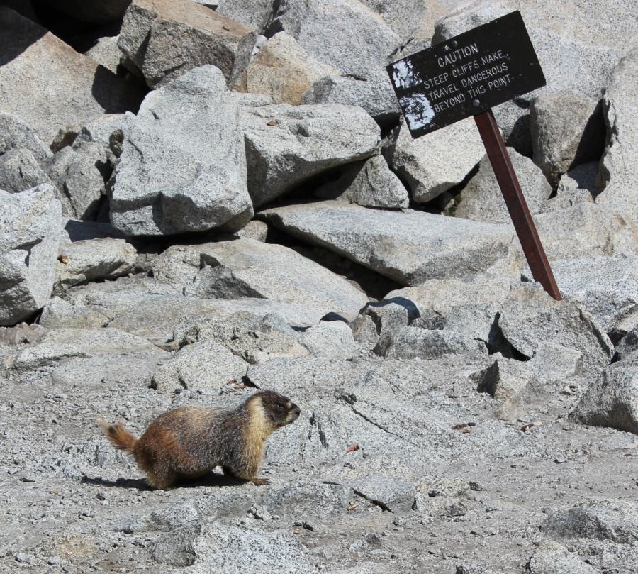 Marmot Tokopah Falls