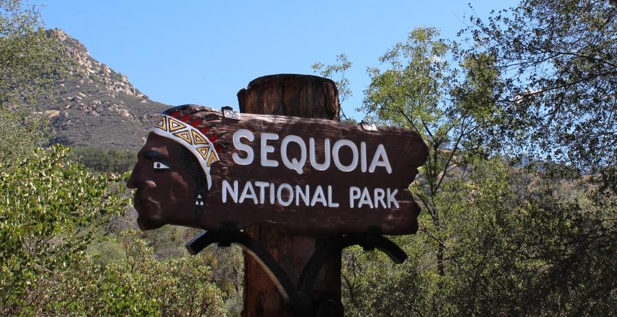 SequoiaIMG_8085