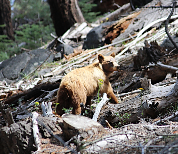 YosemiteIMG_8511