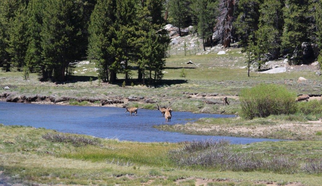 Tuolumne Meadows YosemiteIMG_8665