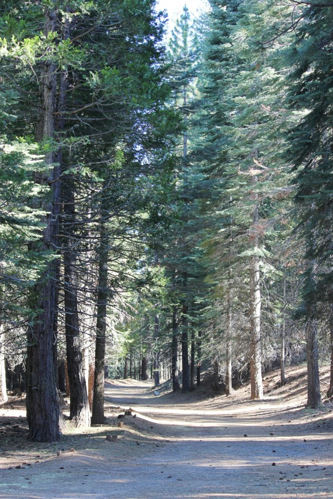 Trail at Yosemite