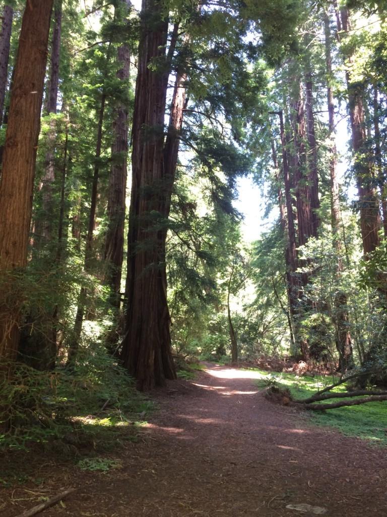 Muir WoodsIMG_3653