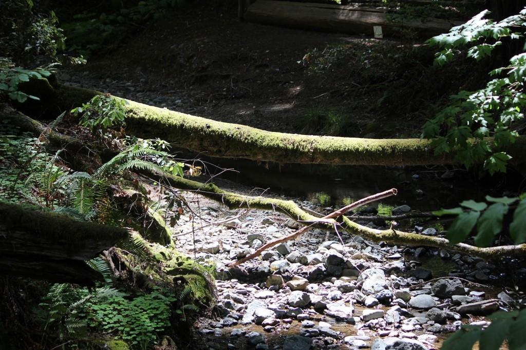 Muir WoodsIMG_8812