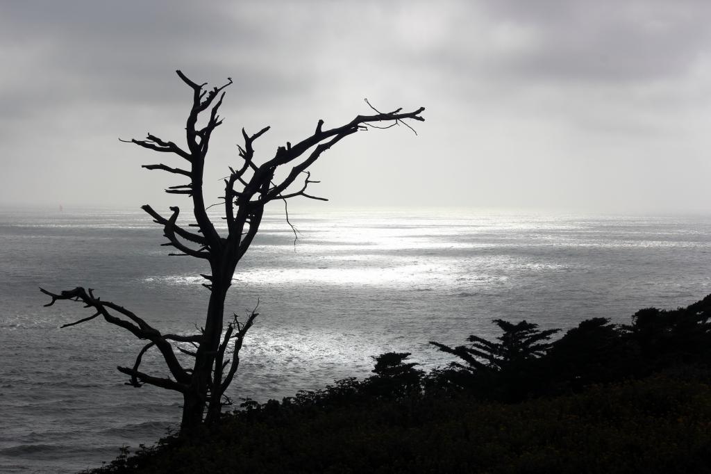 San FranciscoIMG_9235 1