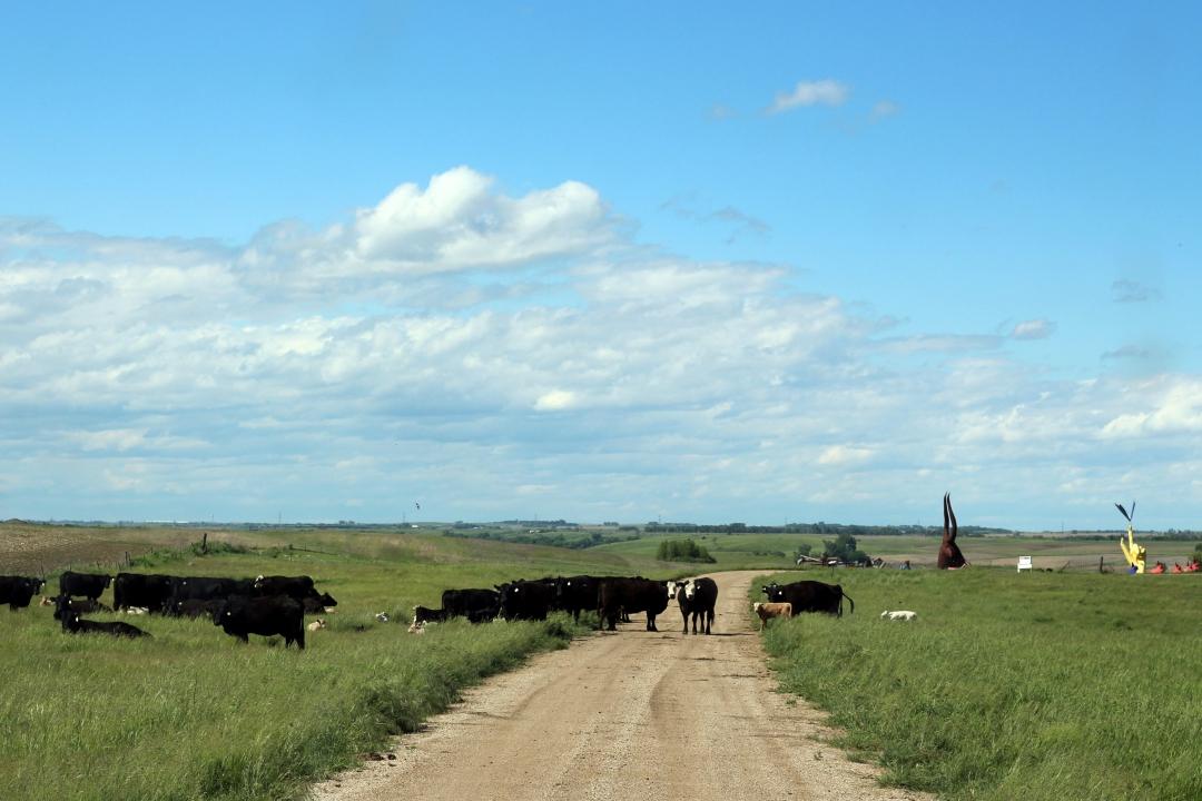 I-90 South Dakota Roadside06