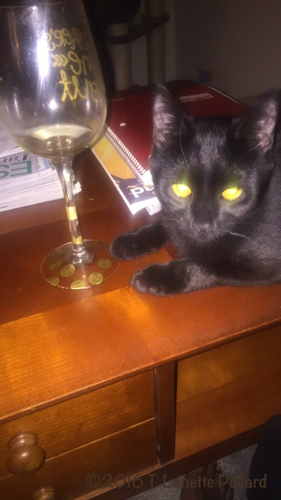 Black Cat during dinner with wine