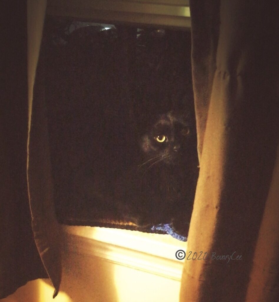 Mozeley my Black Cat laying in the kitchen window watching me cook