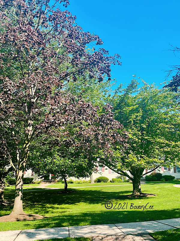 Grass area with trees and blue sky