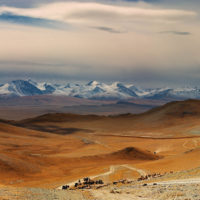 Mongolian nomads driving cattle, Western Mongolia