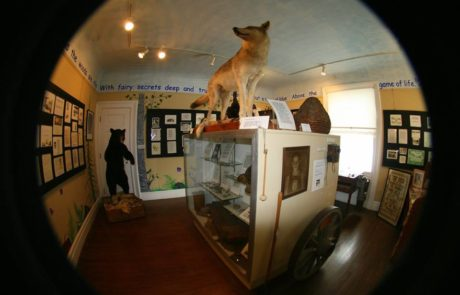 fisheye view of a room in columns museum with ataxidermy coyote and black bear displayed pieces