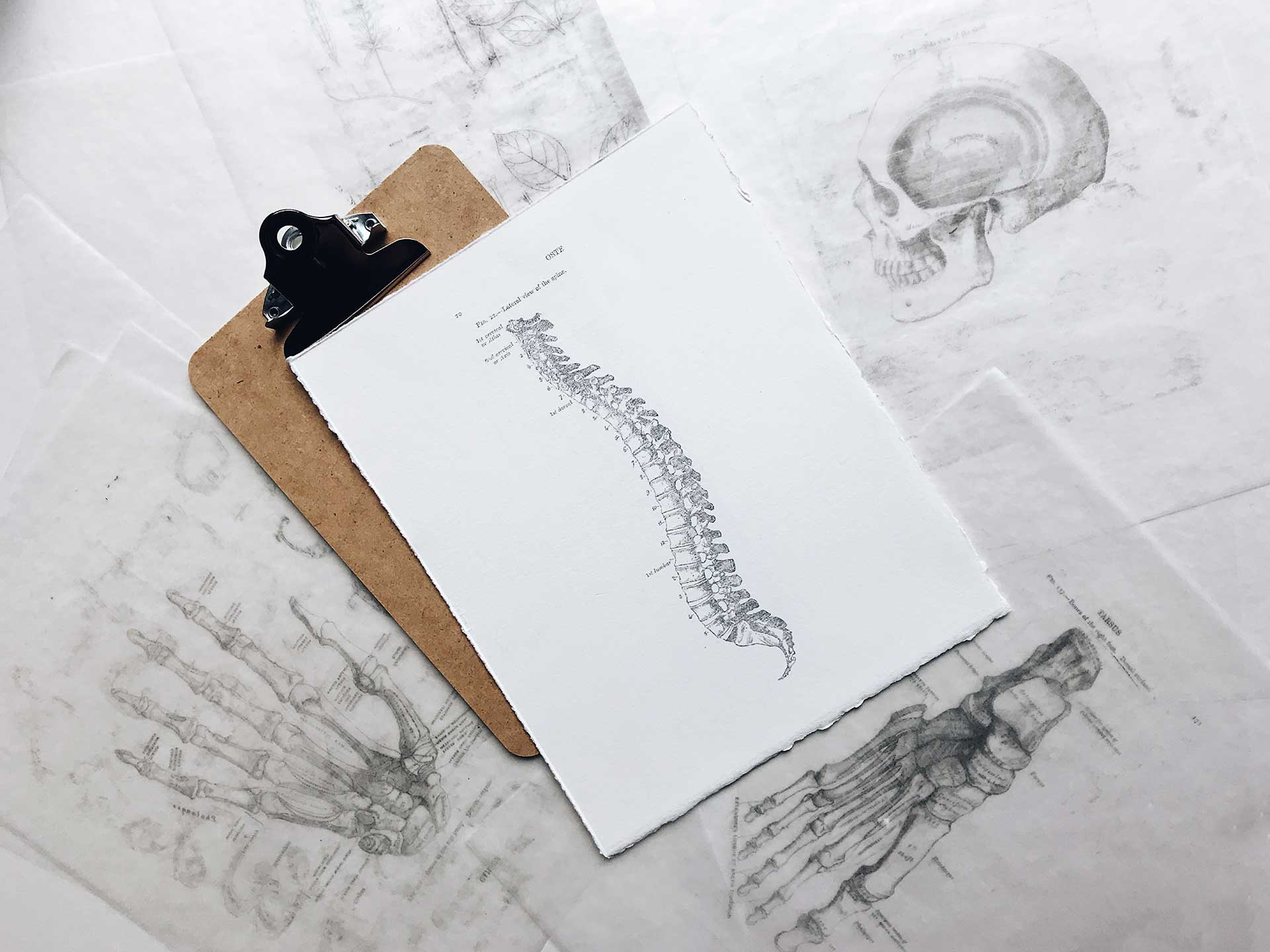 copies of bone diagrams as used by doctors