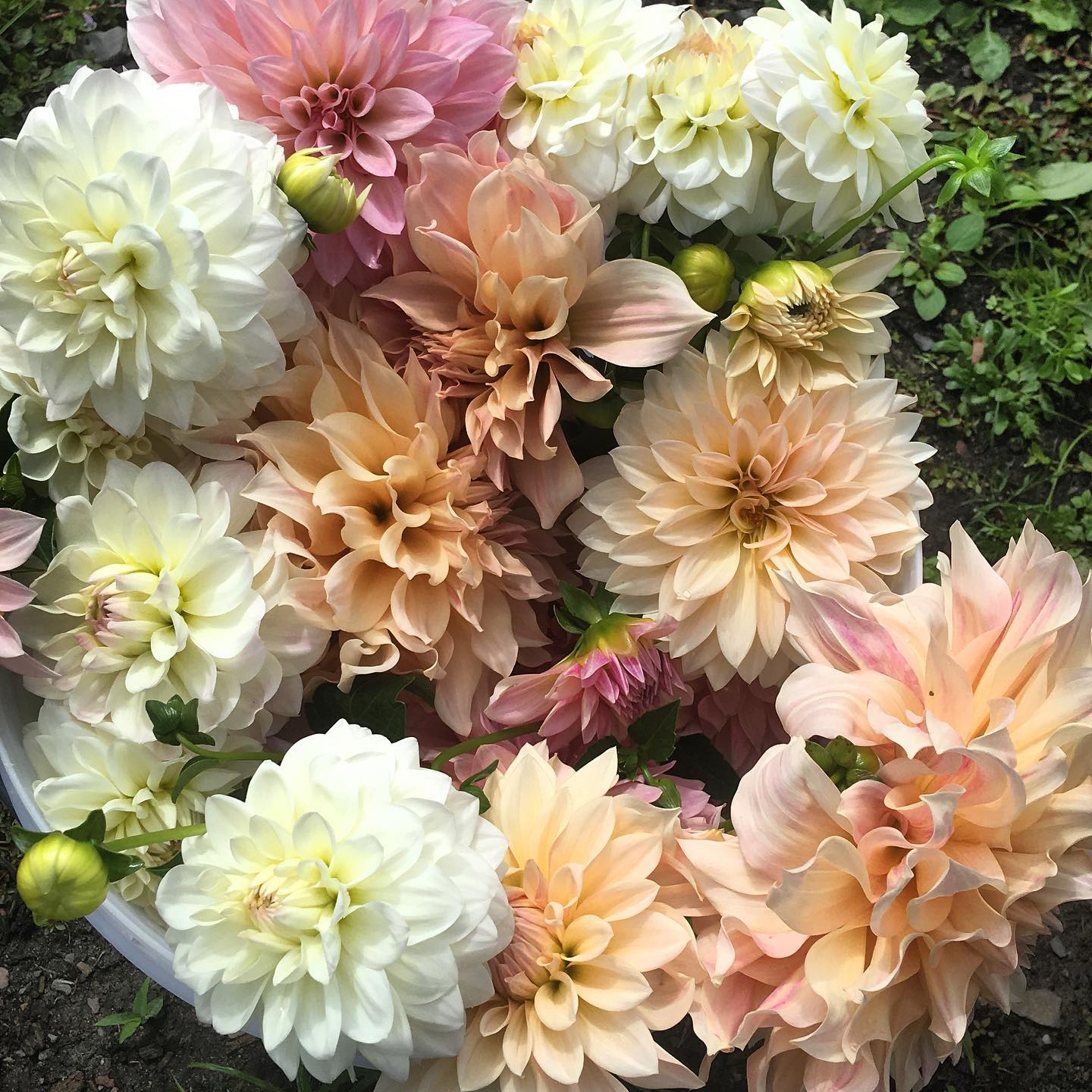 a variety of white, blush, and pink flowers in a bouquet