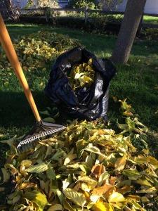 photography, thankful challenge, medford, oregon, fall, autumn, leaves