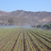 Irrigated Agriculture