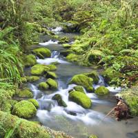 headwatersforestreserve