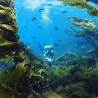 Underwater Parks Photo by Santa Barbara Channelkeeper