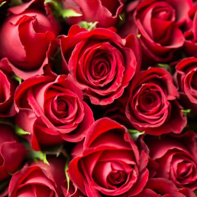 One Dozen Roses | Woodstock Inn B&B