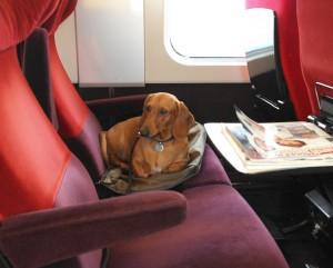 Perro en Thalys