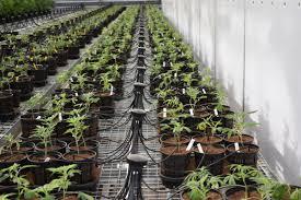 Cannabis Irrigation Supply