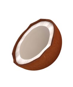 Coconut 3d model