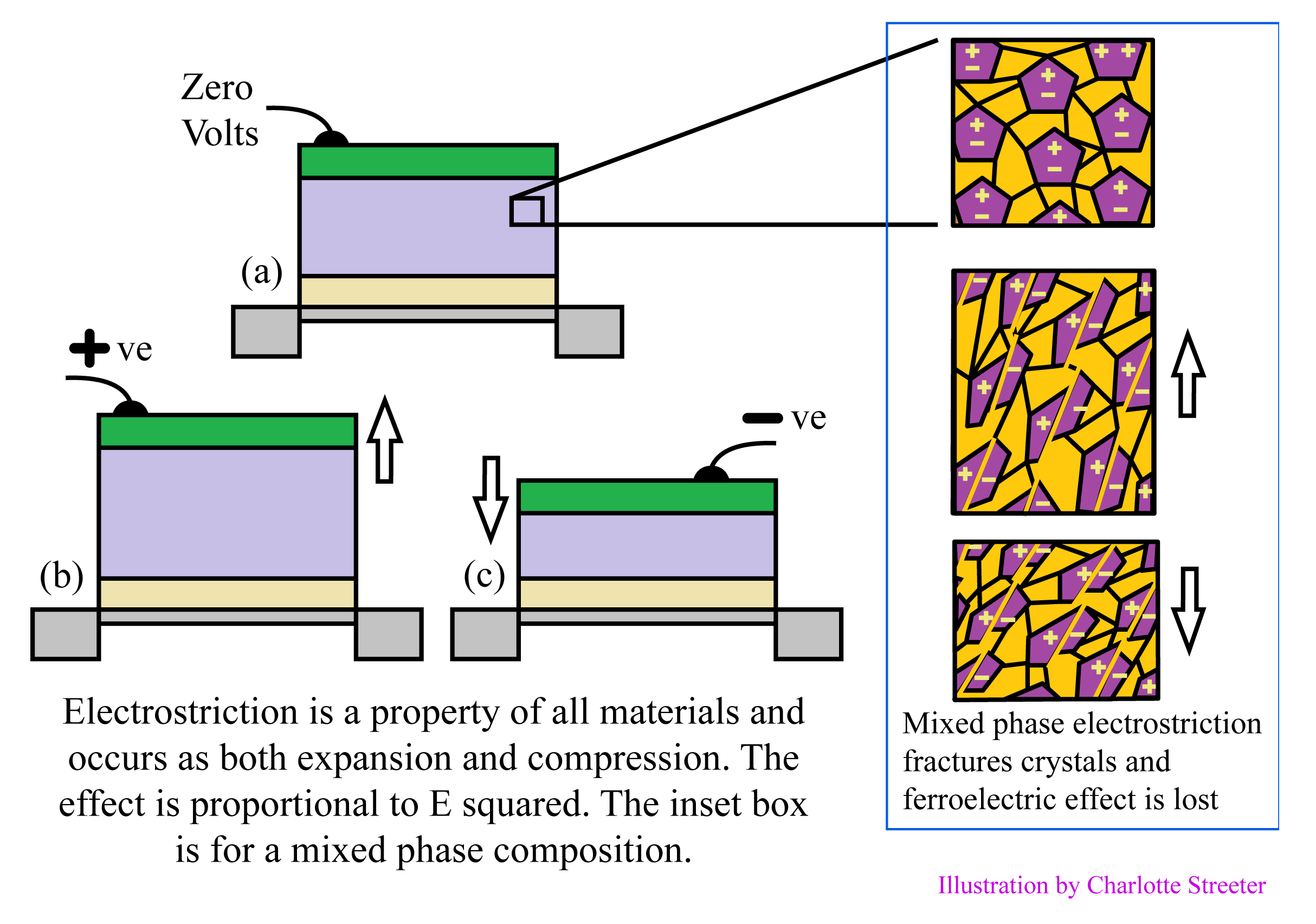Cross sections of cells whose heights are compressed or extended, and diagrams of grains subject to electrostriction