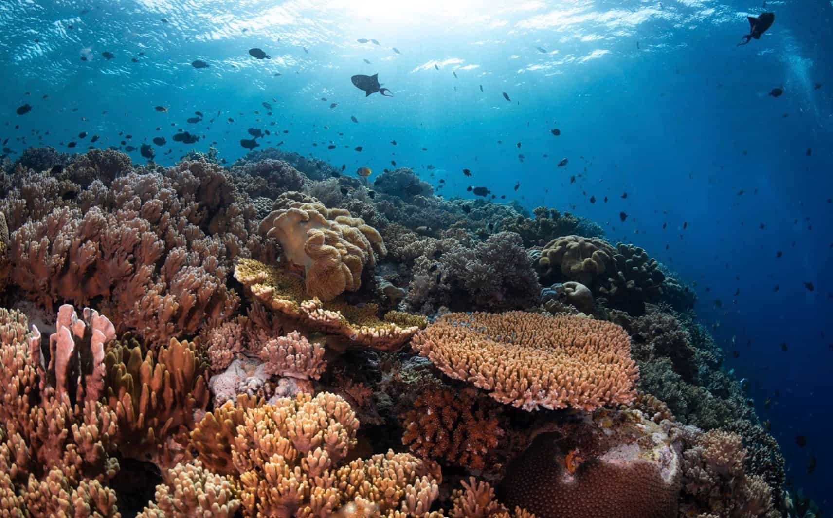 Coral Reef in Wakatobi Indonesia aboard Dive Liveaboard