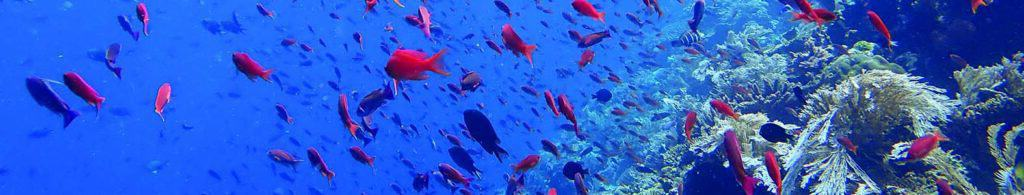 Batu Bolong Dive Site Komodo Indonesia Dive Liveaboards