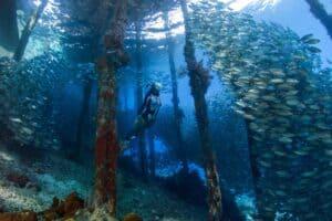 Arborek Jetty, Raja Ampat Indonesia Diving and Snorkeling