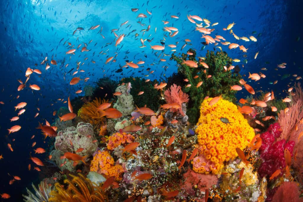 Vibrant reef in Wakatobi full of fish life and macro critters. Perfect for snorkeling or scuba diving
