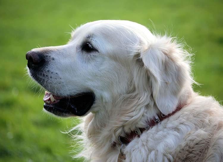 Animal Hospice & Palliative Care