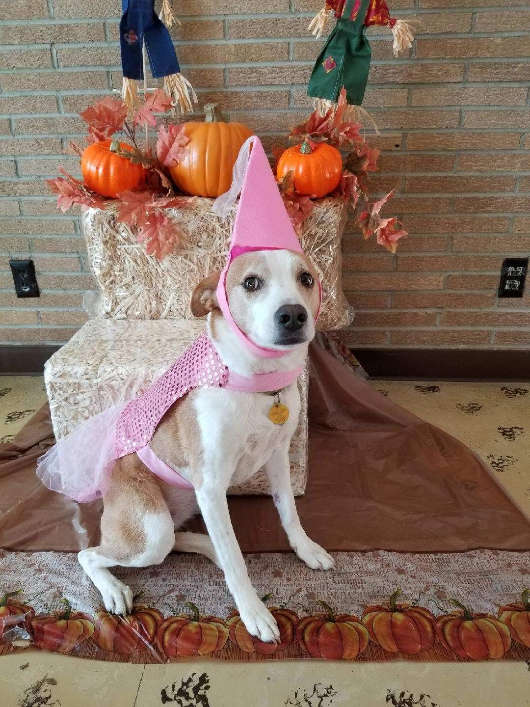 Avoid a Scary Halloween for Your Pet!