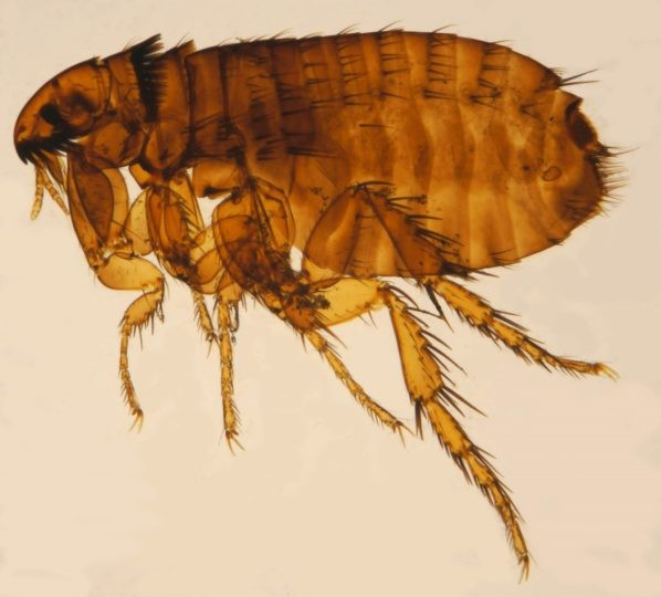 The Importance of Heartworm, Flea & Tick  Prevention