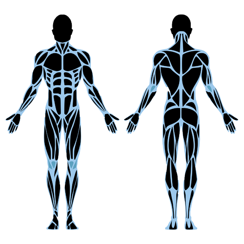 Muscle Corrective Therapy Sutherland Shire