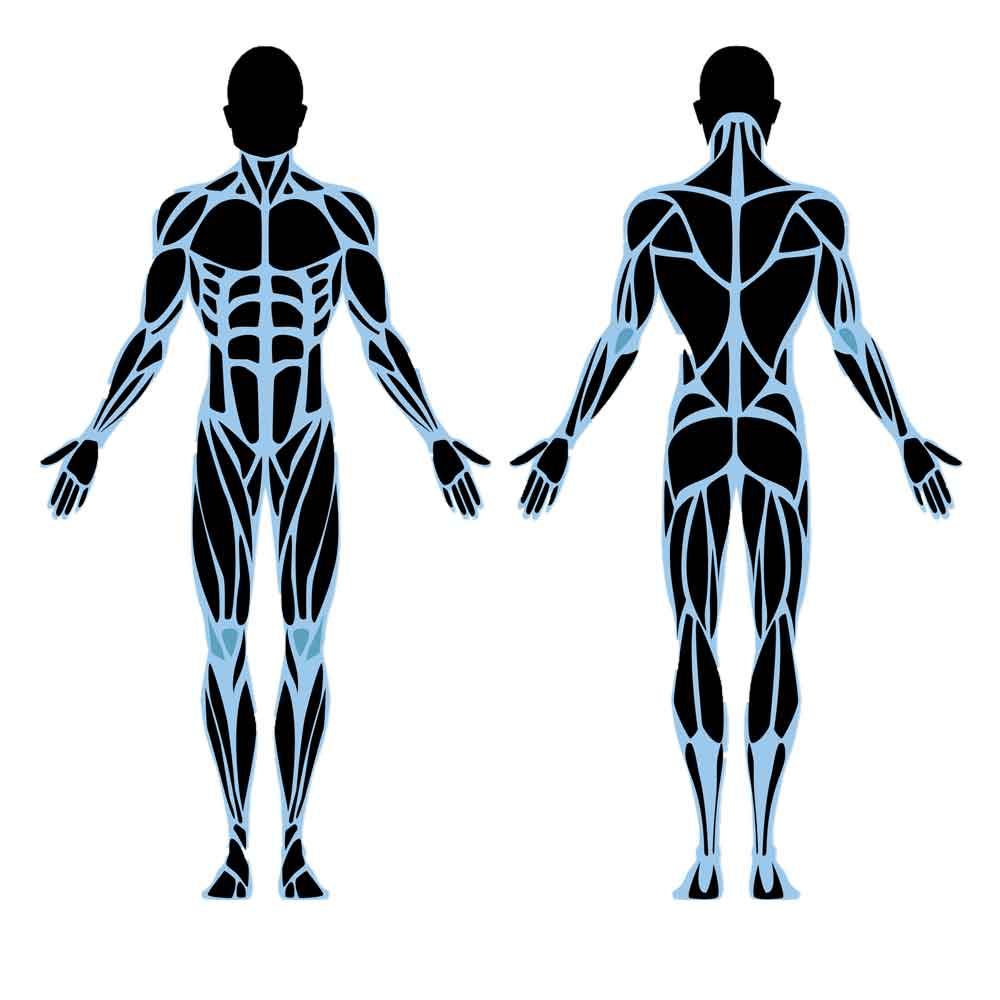 Muscle Corrective Therapy Sydney