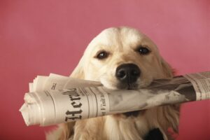 Dog with Newpaper