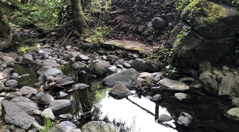 Creek (15)