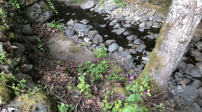 Creek (2)
