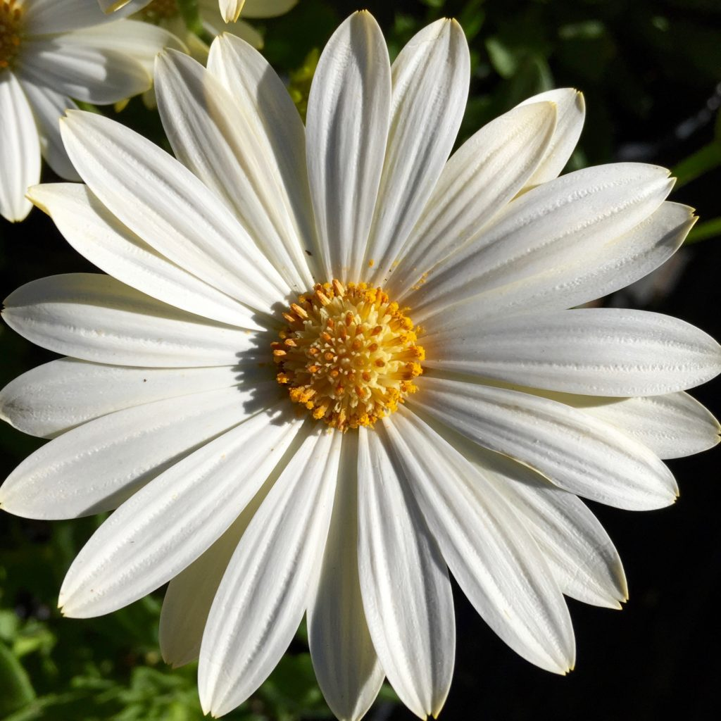 white-flower-2-1024x1024