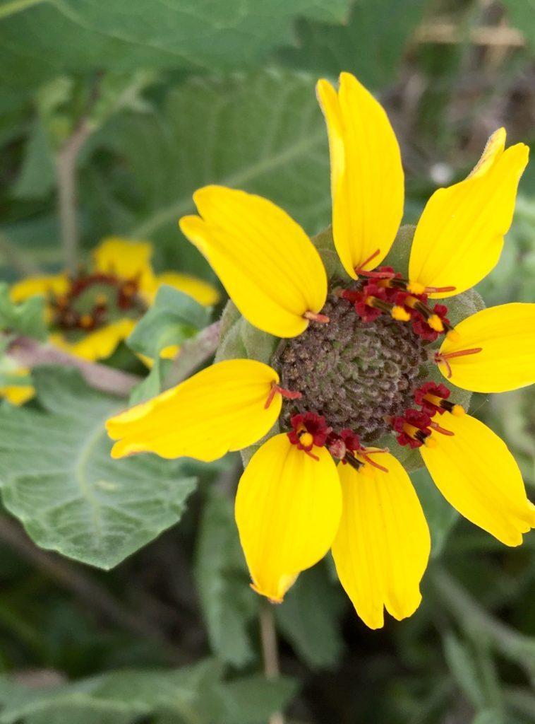 yellow-flower-758x1024