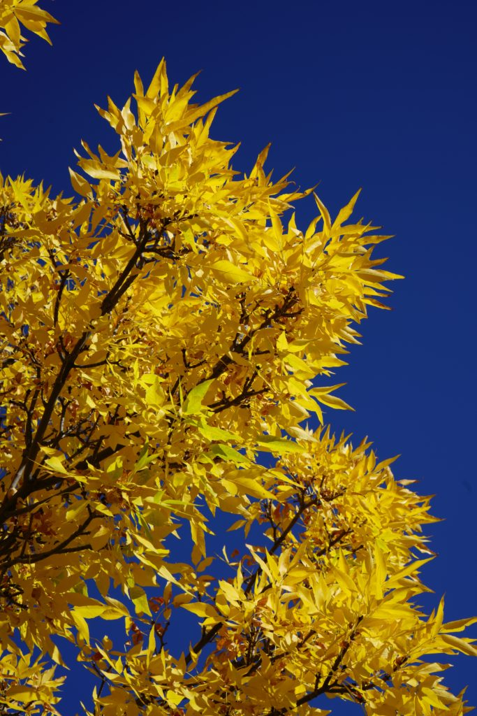 Bright Yellow, Bright Blue