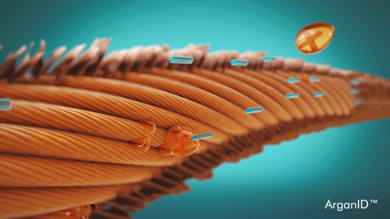 A visual representation of Moroccanoil's ArganID technology, which enhances argan oil's ability to penetrate the hair shaft.