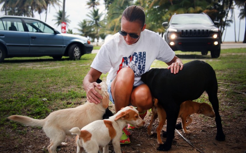 Chrissy Beckles, Founder of The Sato Project, pets dogs in Puerto Rico.