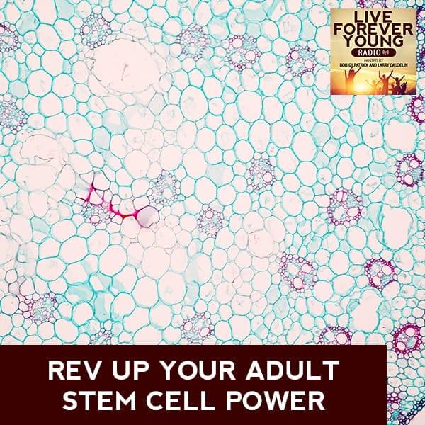 LFY 3 | Stem Cell