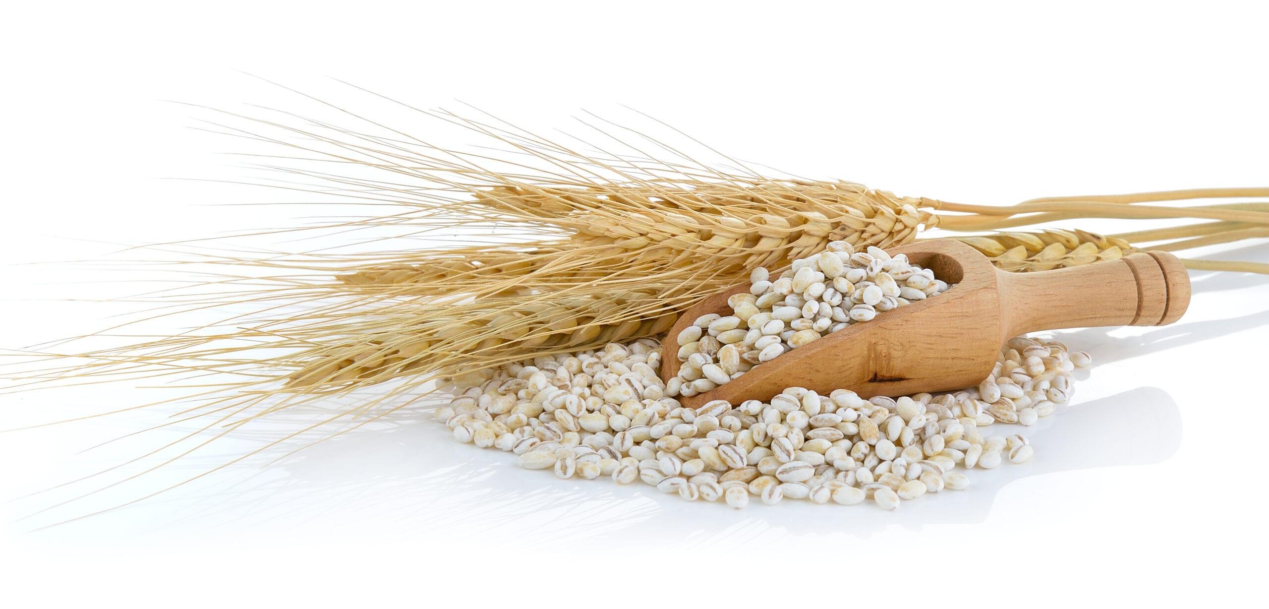 Barley Grains scoop