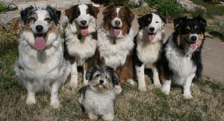 Picture of Dogs.