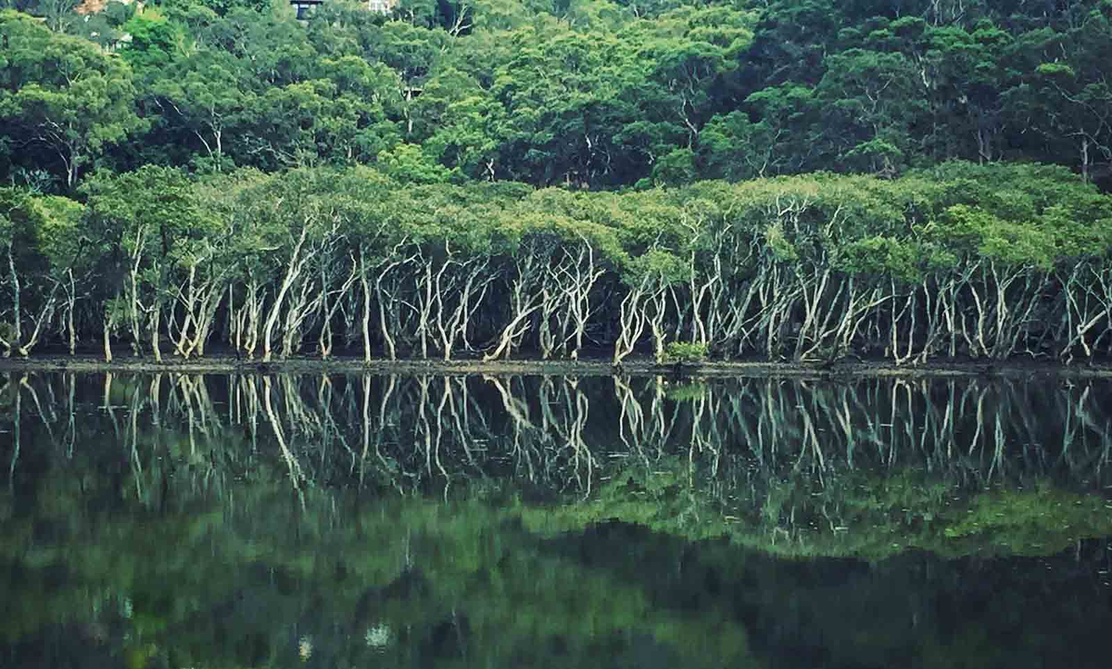mangrove-reflections-642RX9G