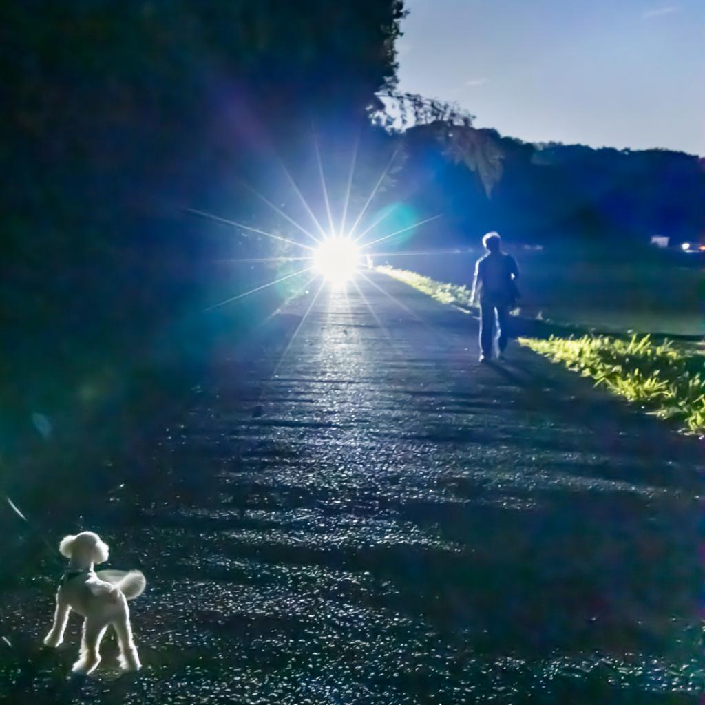 Dog walking at night